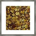 Transition Of Autumn Framed Print