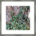 Tree 4 Framed Print
