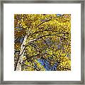 Tree 4 Framed Print