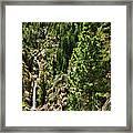 Tree Above Leavitt Falls  Framed Print