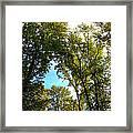Tree Arches At Clackamette Park Framed Print