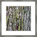 Tree Bark Detail Study Framed Print
