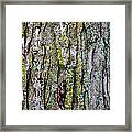 Tree Bark Detail Study Framed Print by Design Turnpike