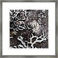 Tree Bark Fungi Framed Print by Steven Valkenberg