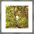 Tree Blossom 1 Framed Print