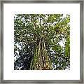Tree Canopy Framed Print