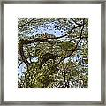 Tree Dancer Framed Print