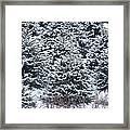 Tree Farm #3 Framed Print