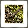 Tree Grows From Rock Outcrop Framed Print