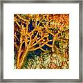 Tree In A Park Hot Springs Framed Print