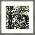 Tree In Blue Ridge Mountains Framed Print