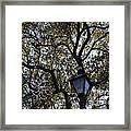 Tree In French Quarter Framed Print
