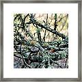 Tree Moss Framed Print