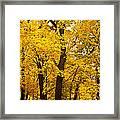 Tree Of Gold Framed Print