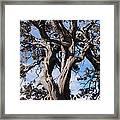 Tree Of Hope Framed Print