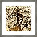 Tree Of Life  Framed Print by Ann Powell