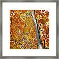 Tree Of Orange Framed Print by Guy Ricketts