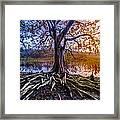 Tree Of Souls Framed Print
