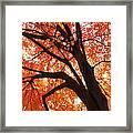 Tree Orange Blast Framed Print