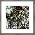 Tree Reflected In Leaves Framed Print