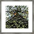 Tree Scales Framed Print by Christian Rooney