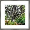 Tree Series 48 Framed Print