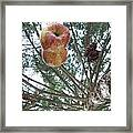 Tree Spiral Framed Print