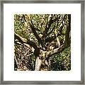 Tree Trunk And Limbs Framed Print