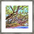 Tree Tunnel Near Isaac Hale Beach Framed Print