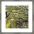 Trees Abstarct Yellow Framed Print