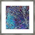 Trees Alive With Color Framed Print