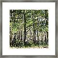 Trees And Knees Framed Print