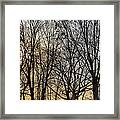 Trees And Late Afternoon Light Framed Print