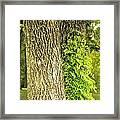 Trees At My Window Framed Print