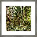 Trees At Olympic National Forest Framed Print