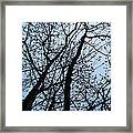 Trees From Below Framed Print