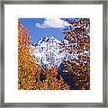 Trees In Autumn, Colorado, Usa Framed Print
