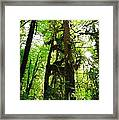Trees In The Hoh National Rain Forest Framed Print