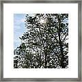 Trees At The Park Framed Print