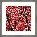 Trees Of Autumn Framed Print
