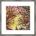 Trees Of The Four Seasons Framed Print