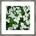 Trillium Cluster Framed Print by Thomas Pettengill