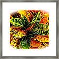 Tropical Croton Vignette Framed Print by Lisa Cortez