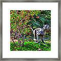 Tropical Mountain Lion Framed Print