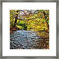 Trout Stream Framed Print