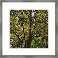 Trunk Of Life Framed Print