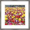 Tulip Flower Festival Art Prints Spring Framed Print