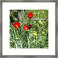 Tulip Garden Framed Print