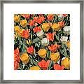 Tulip Stretch Framed Print