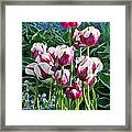 Tulips Among The Forget Me Nots Framed Print